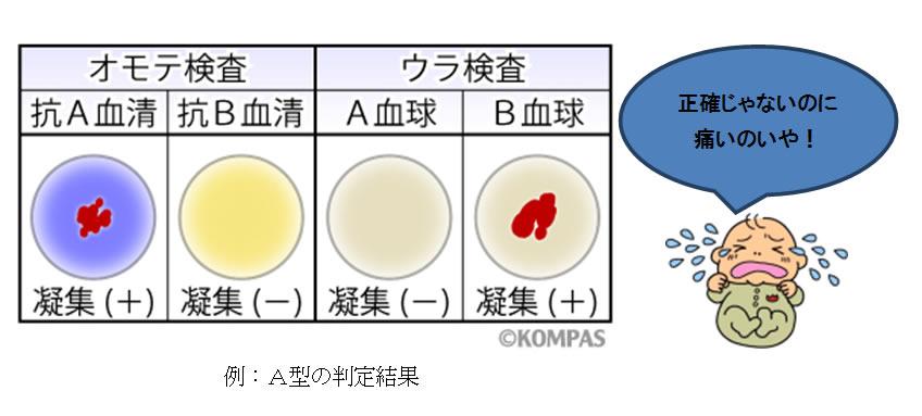 型 生まれる 血液